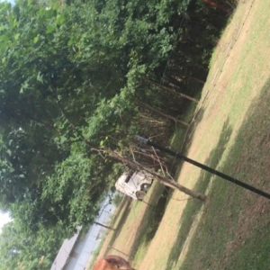 poor horse is locked in a hence in someone's back yard