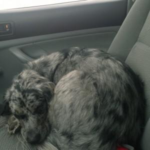 Sleepy co-pilot